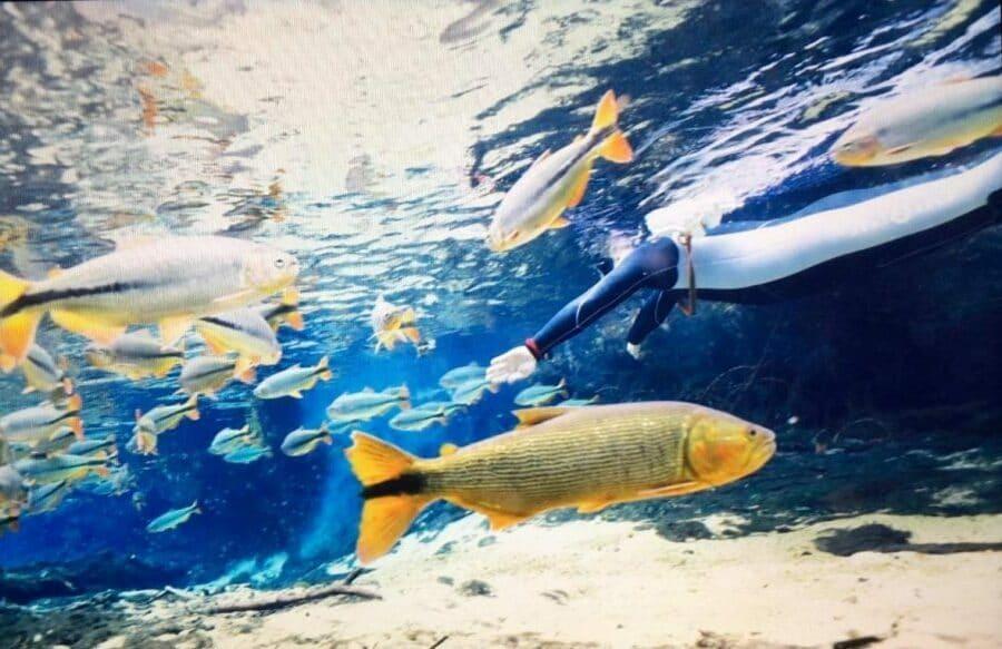世界淡水魚園水族館